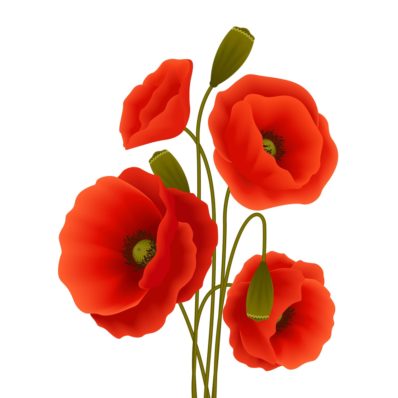 Poppy Flower Poster Free Download Vector CDR, AI, EPS and PNG Formats