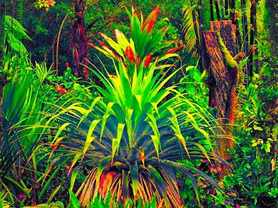 Tropical flora.