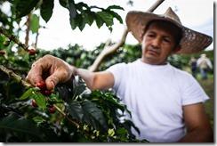 2060609 exportadores cafe