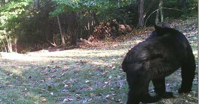 Trail Cam Visitors, and Quilts in the Machine!