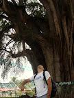 Joshua at El Tule (the largest tree in the World) outside Oaxaca