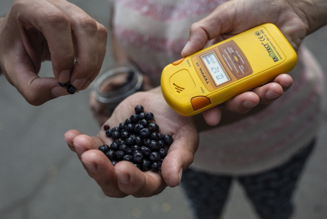 People forage for food in the village of Karpylivka, Ukraine, near the Chernobyl exclusion zone. A woman who's come to visit her mother picked berries from inside the exclusion zone. The berries are being measured with a geiger counter. The level is 0.12 microsieverts per hour. Photo: Anastasia Vlasova / PRI