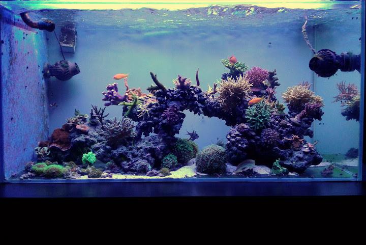432l - Morskie Mateusza89 IMG-20151025-WA0003