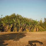 Maher-Farming-101.jpg