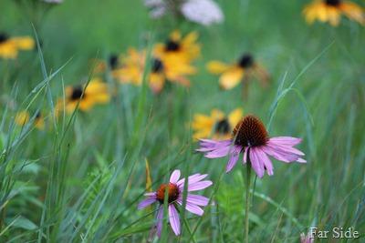 Flowers in the wildgardens
