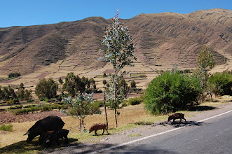 Photo: We get on the road immediately and head down to the Urubamba Valley at 9,000 ft., where we will acclimate for a few days.