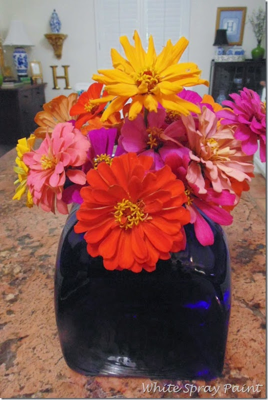 South Texas Zinnias