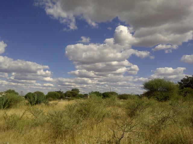The bush under a big sky