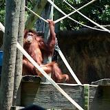 Houston Zoo - 116_8487.JPG