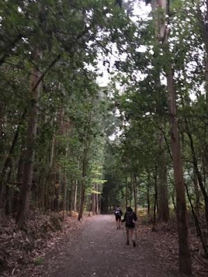 Santjago ceļš. 23. diena. Mežs.