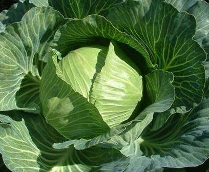 Sayur Murah sebagai Menu Sehat untuk Sahur