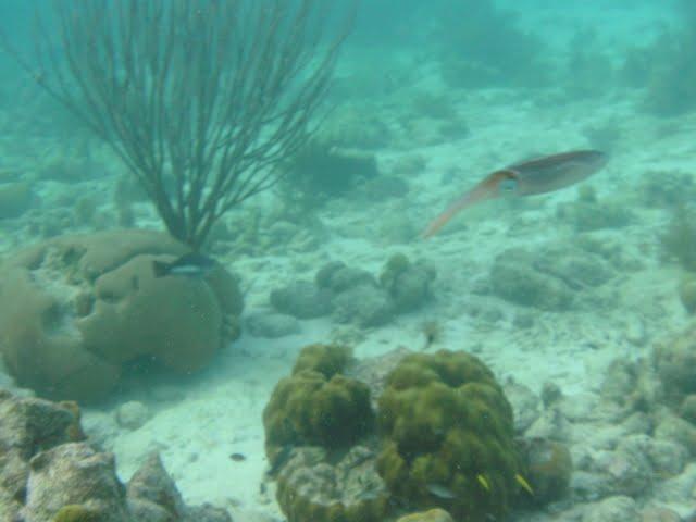 Bonaire 2011 - PICT0099.JPG