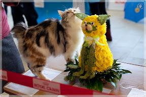 cats-show-25-03-2012-fife-spb-www.coonplanet.ru-037.jpg