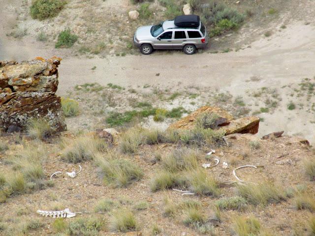 Animal bones and my Jeep