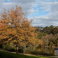 2010 06 13 Flinders University - IMG_1288.jpg