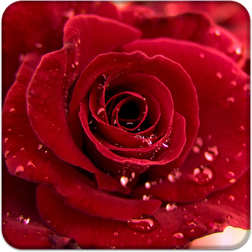 Rose Wallpaper HD Lock Screen app (apk) free download for Android/PC/Windows