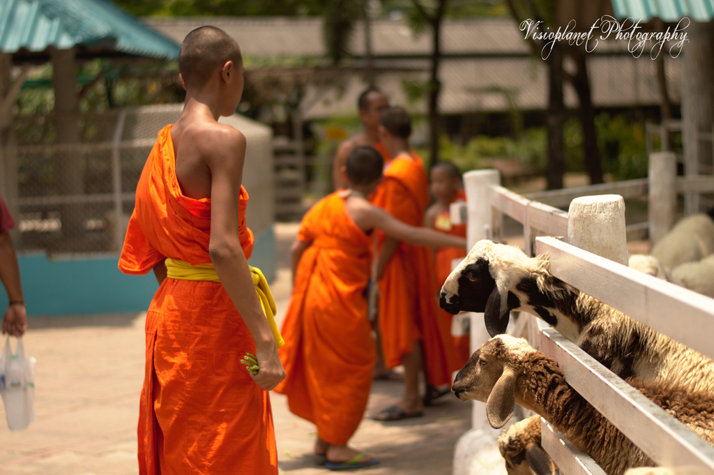 The monk and his sheep by Sudipto Sarkar on Visioplanet
