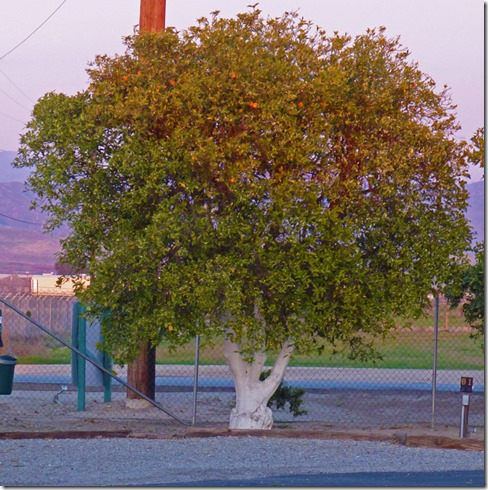 Orange Grove RV Park, Bakersfield