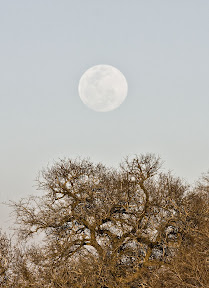 Moon Over South Africa
