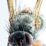 Tiere und Insekten...