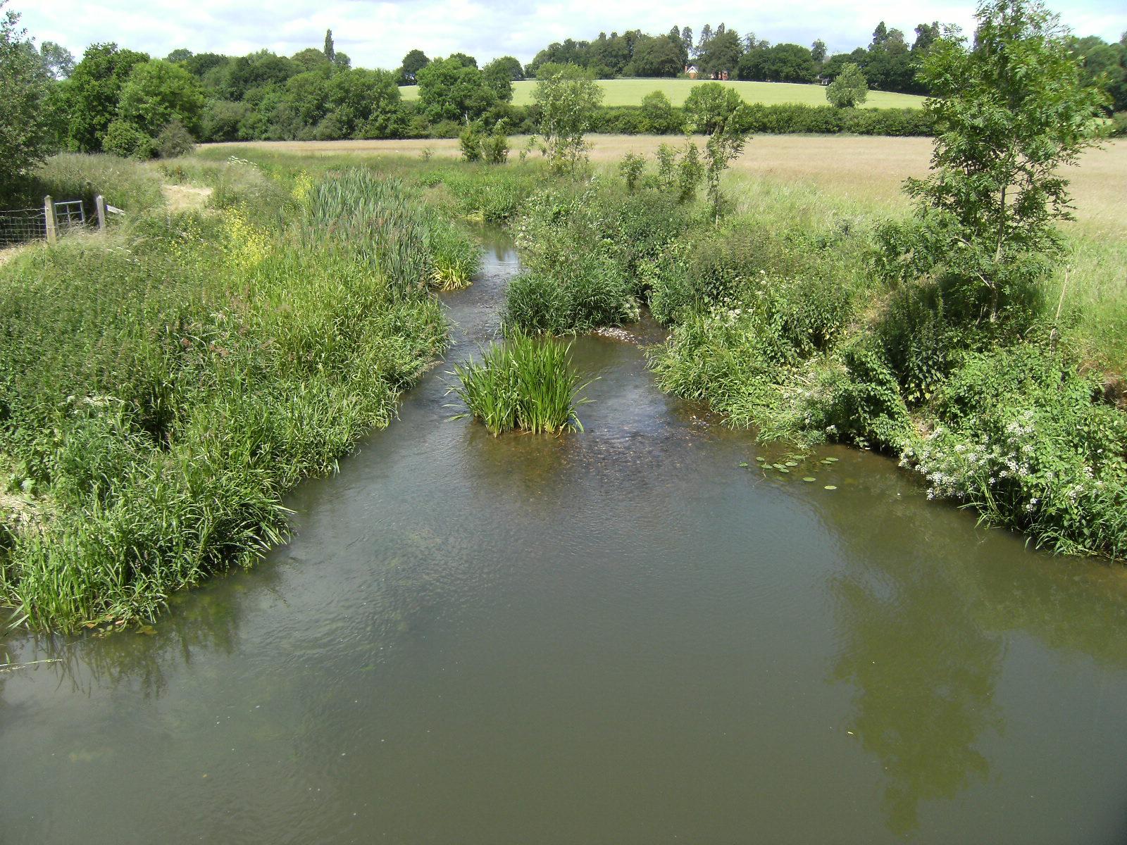 DSCF1008 River Eden outside Penshurst (normal level)
