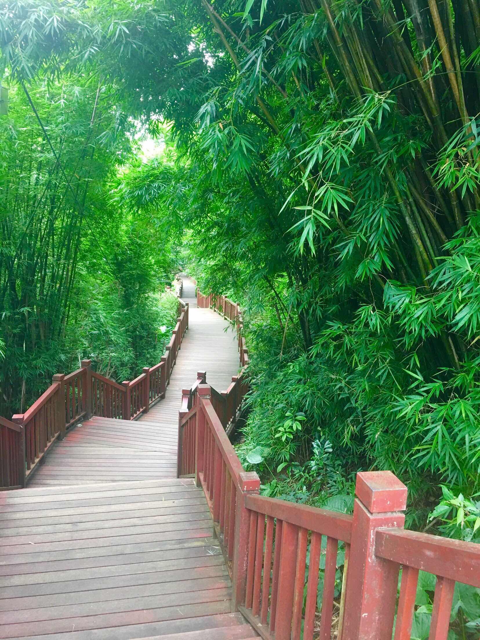 shifen waterfall pingxi shifen taiwan's little niagara taiwan travel bamboo trail