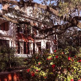Late Winter in Savannah by Dee Haun - City,  Street & Park  Street Scenes ( red, georgia, late winter, white house, city, street scene, 190312f7678e2, late afternoon, savannah, azalea )