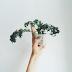 domowa uprawa roślin