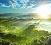 green_jungle_hd1080p.jpg