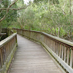 Elevated timber bridge over Owens Creek on the Owens Walkway in Redhead (390989)