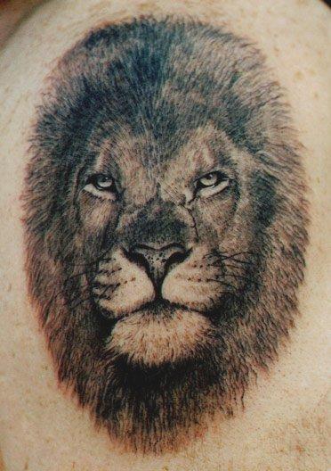 Lion #2
