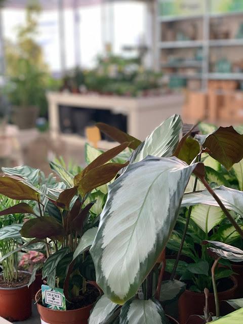 Plantas de interior FUPAR