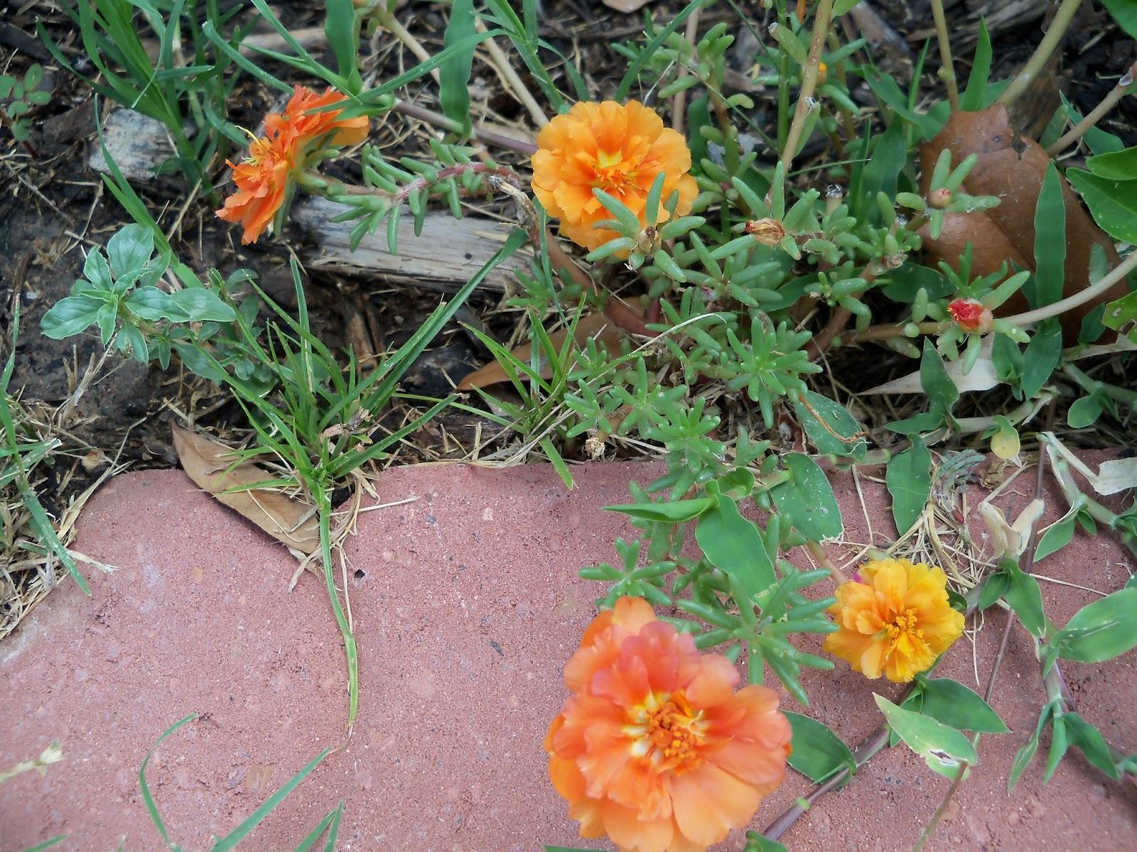 Gardening 2011 - 100_0122.JPG