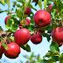 Helambu will be made an apple village