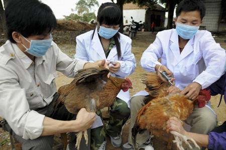 Hinh anh: Hinh anh  Tiem chung vaccin ga