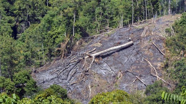 Pakar: UU Ciptaker Telah 'Merusak' Lingkungan di Papua Barat