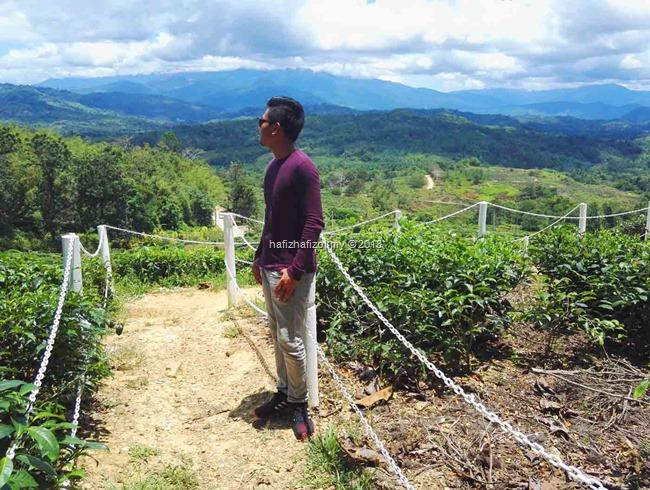 pemandangan di Ladang Teh Sabah