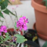 Gardening 2012 - IMG_3315.JPG
