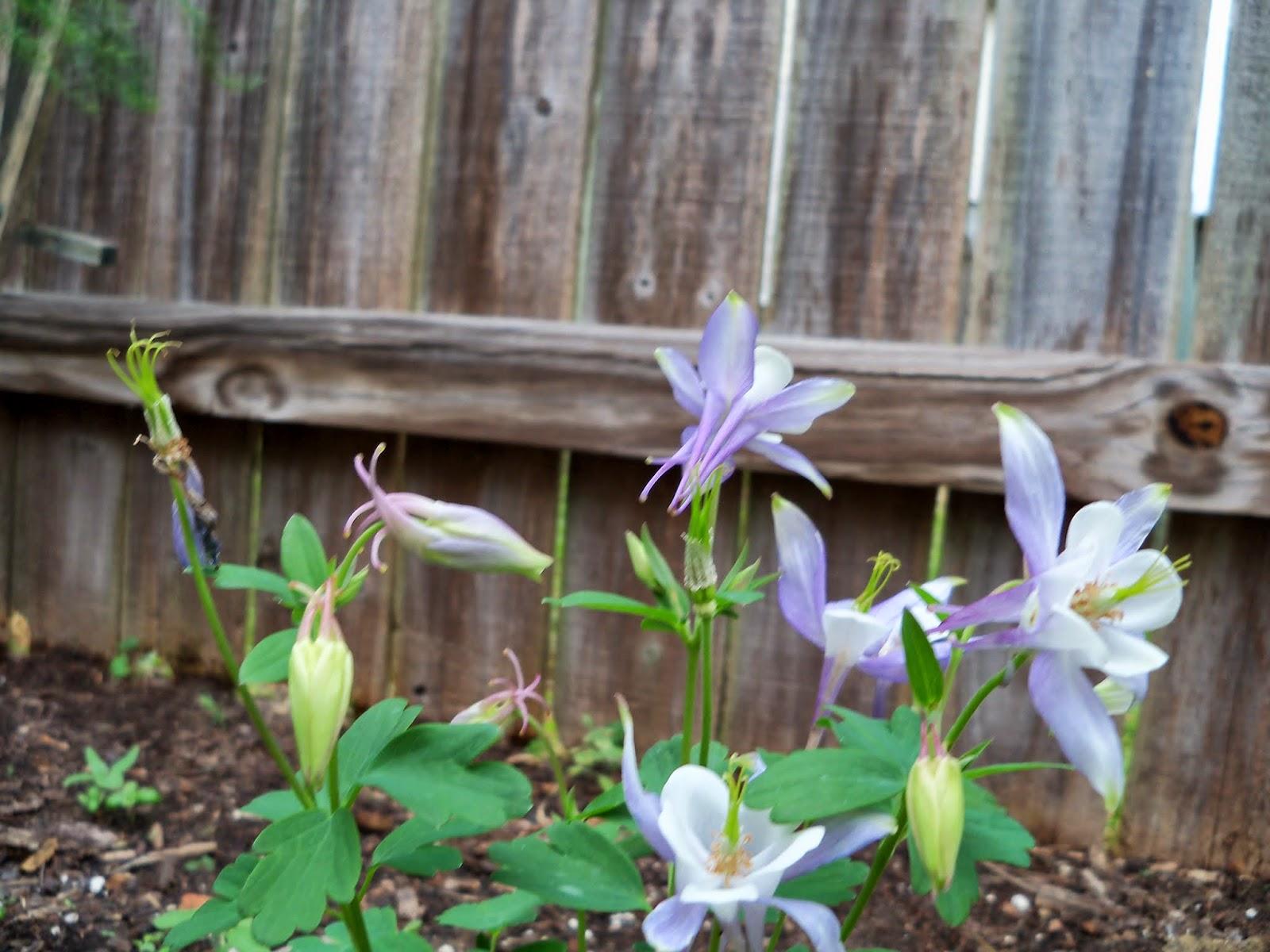Gardening 2014 - 116_1281.JPG