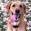 Doug Levin's profile photo