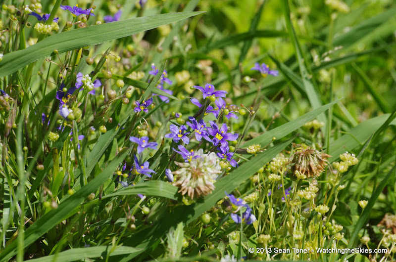 2013 Spring Flora & Fauna - IMGP6428.JPG