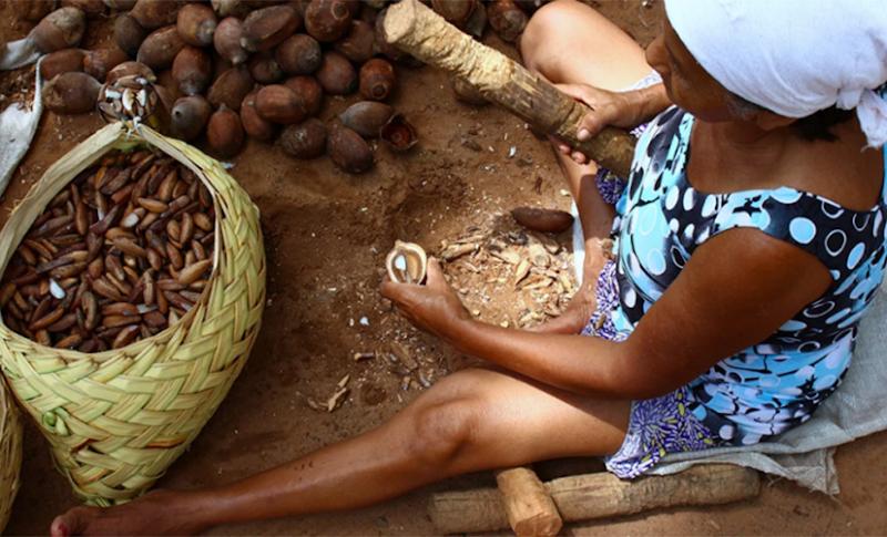 Extrativistas da amêndoa de babaçu no Médio Mearim recebem mais R$ 450 mil em subvenções