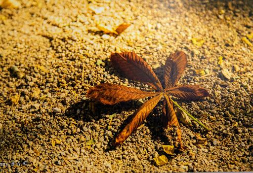 05 Осенний лист Бенни Бен Акива.jpg
