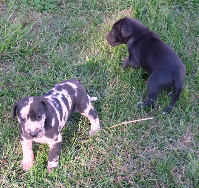 Suzy's boy & Lucian @ 4 weeks