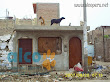 1era visita asistencia animales damnificados terremoto  Pisco 2007 (23)