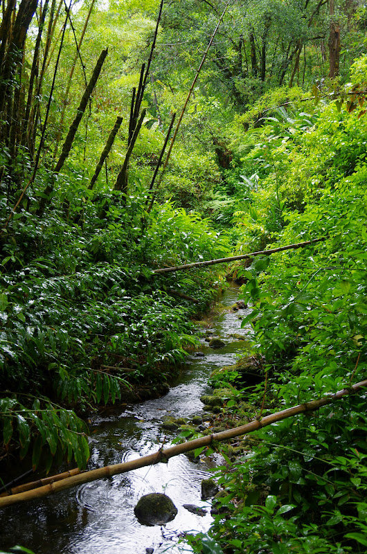 06-23-13 Big Island Waterfalls, Travel to Kauai - IMGP8835.JPG