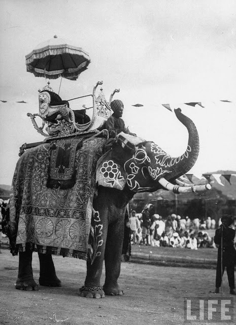 Nizam's personal elephant