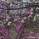 030311ArborHillsInEarlySpring