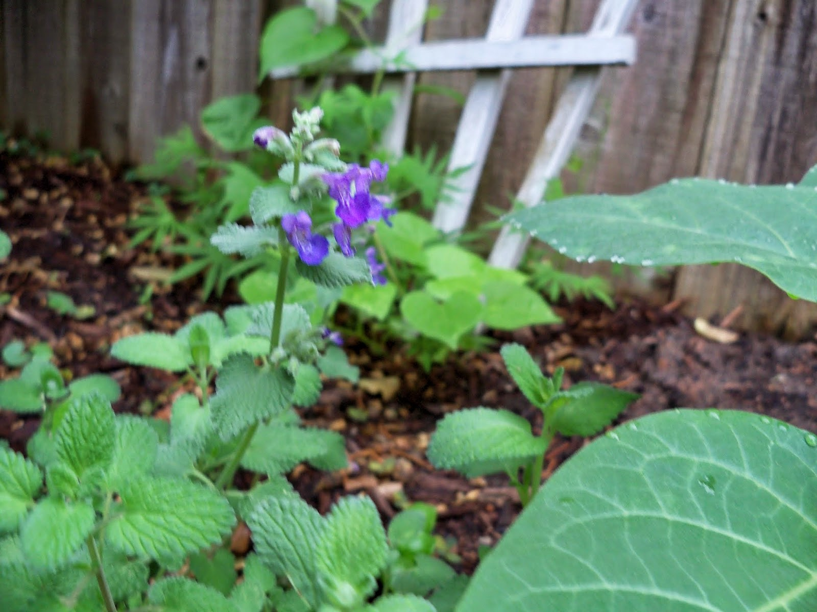 Gardening 2014 - 116_1846.JPG