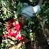 Motociclista morre após colisão frontal com caminhão em Baraúna-RN